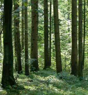 Wald weltweit forstwirtschaft in deutschland for Bodenbeschaffenheit deutschland