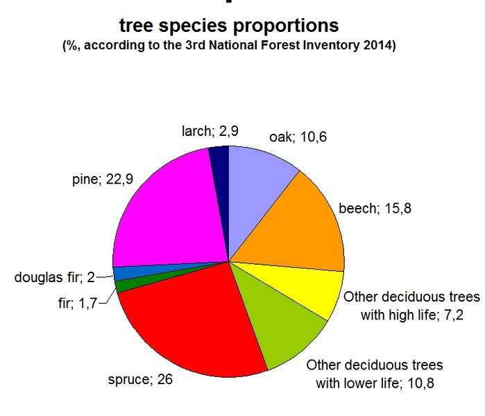 Forest Facts German Forestry 300 Yrs Of Sustainability Campaign